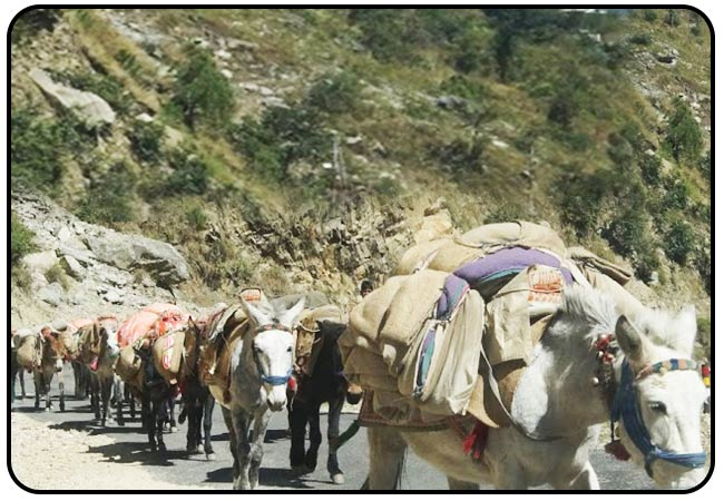 horses-carrying-pilgrim-luggage-gangotri