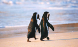 relationships-penguins-on-beach