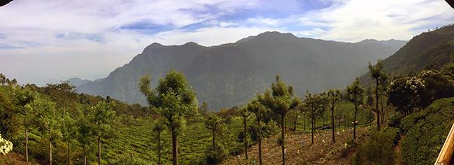 tea-plantation-from-porch